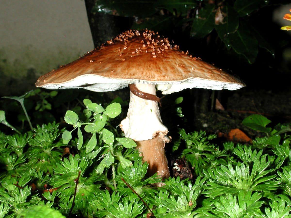 moss, wild mushroom, wood, nature, fungus, grass