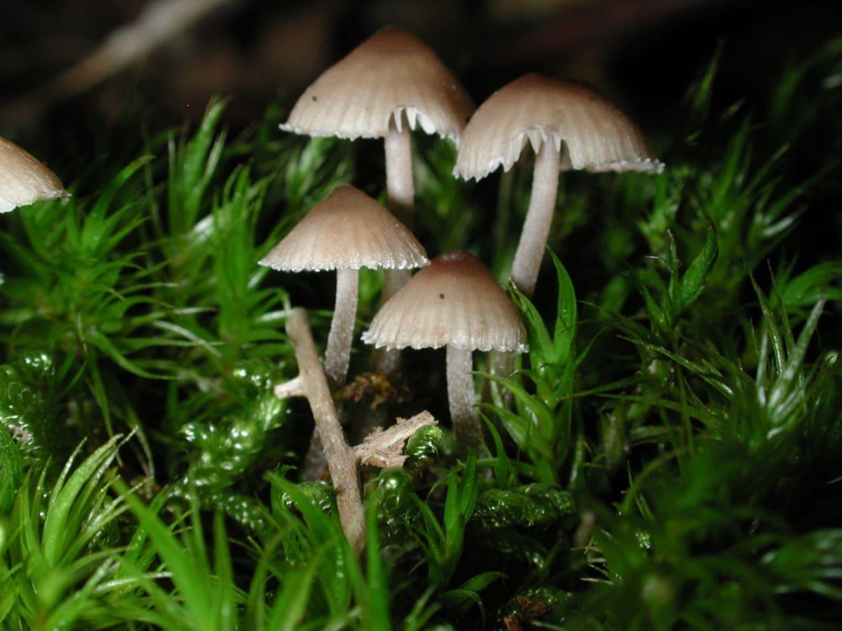 champignon, nature, mousse, spore, feuille, bois, herbe, champignon Shiitake