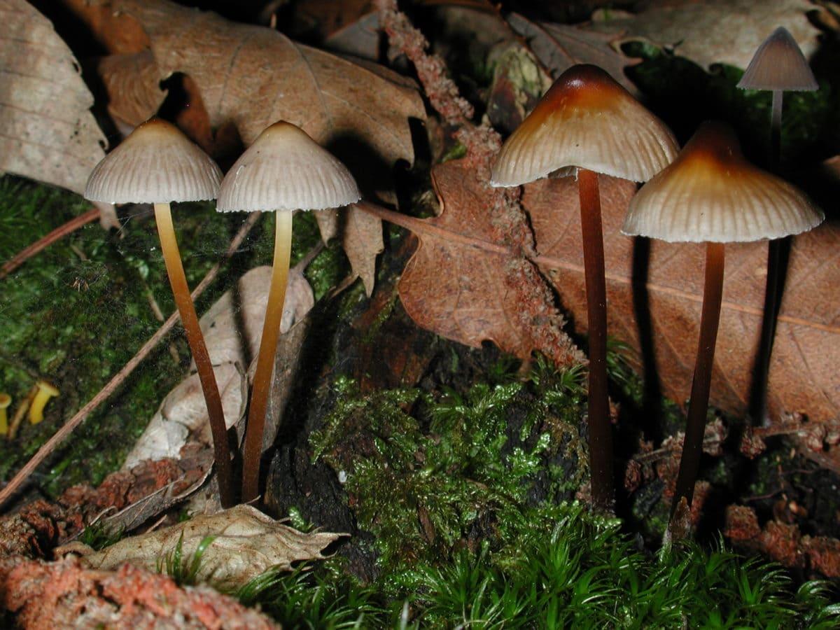 bois, mousse, champignon, feuille, champignon, spore, poison, nature