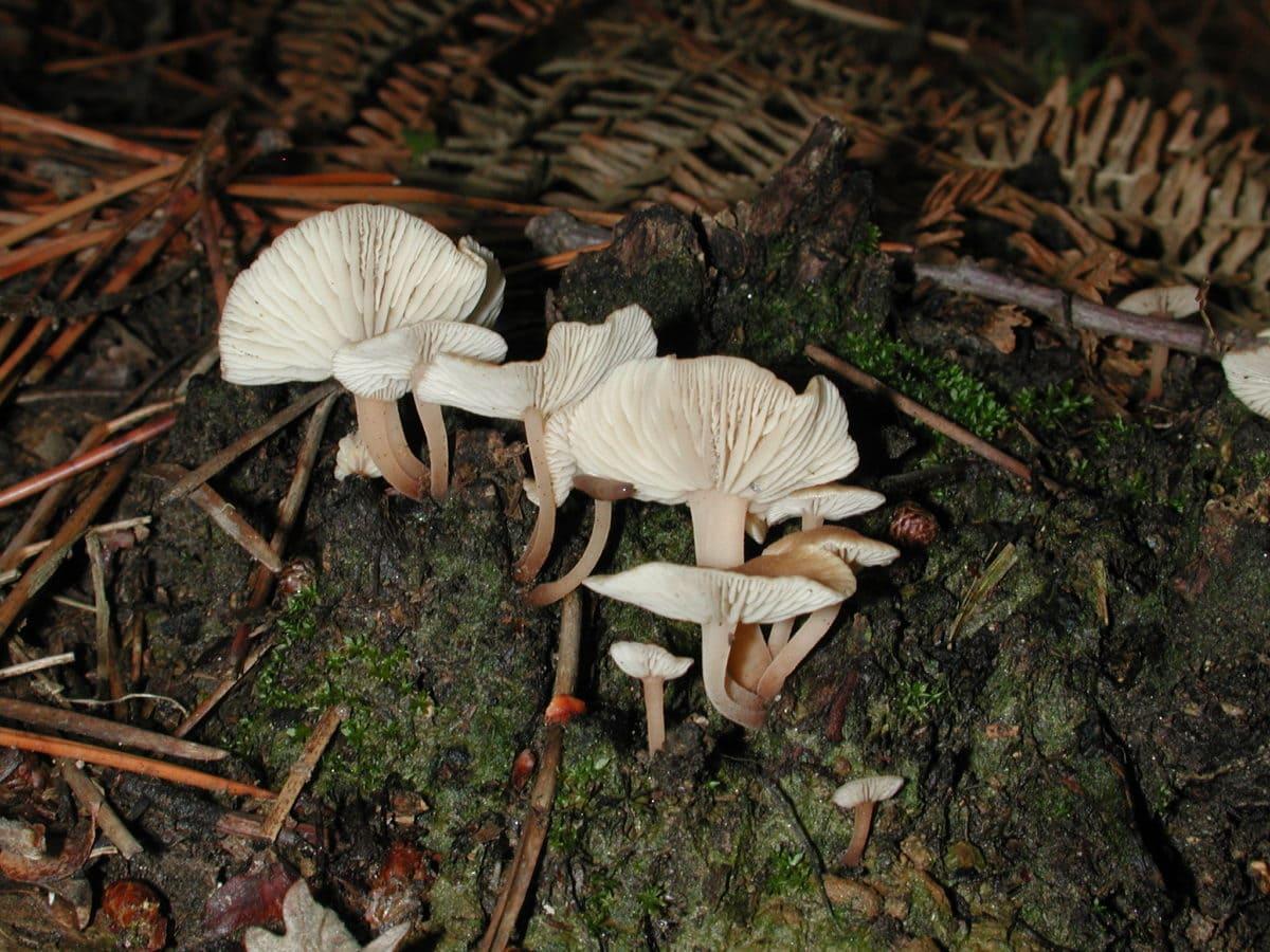 fungus, nature, white mushroom, moss, stem, poison, wood, leaf