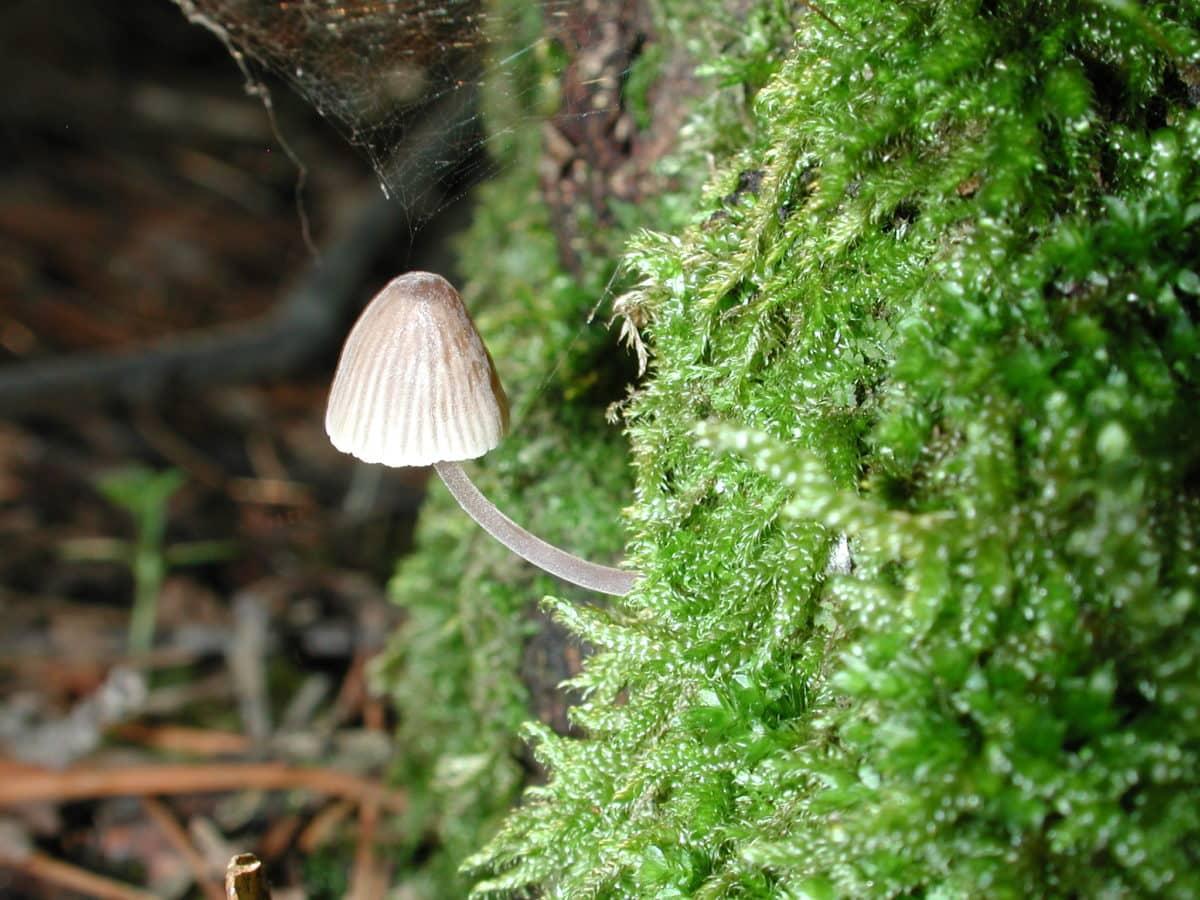 champignon, toile d'araignée, environnement, nature, feuille, été, champignon, mousse, bois