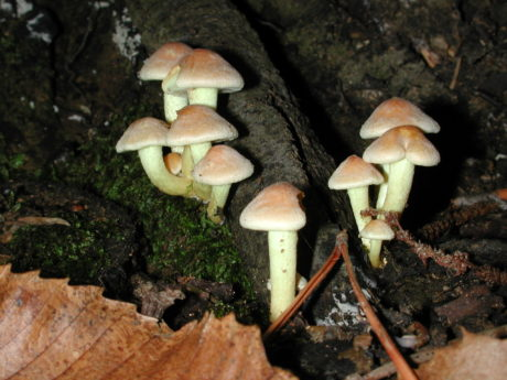 nature, spore, wood, poison, toxic, moss, mushroom, fungus, night