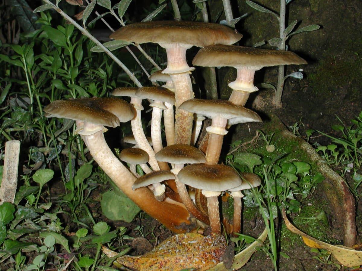 wood, mushroom, poison, brown, fungus, nature