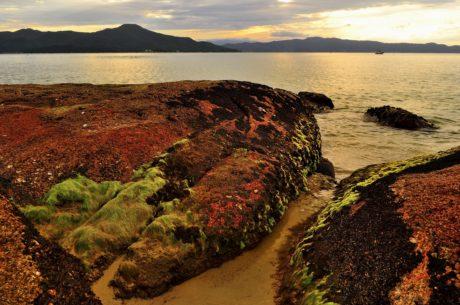 seashore, landscape, beach, water, sunset, daylight, ocean, sea, coast