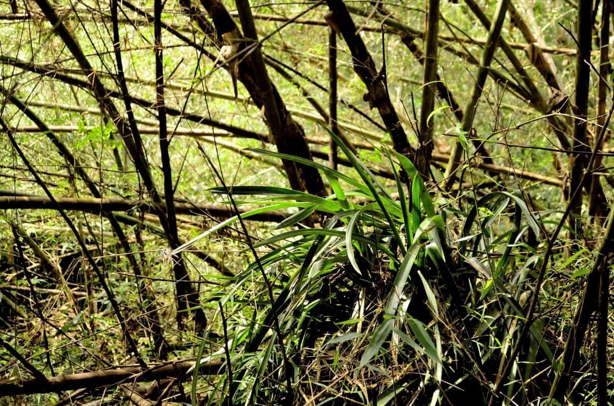 busk, tre, natur, tre, blad, skog, plante, gren, utendørs