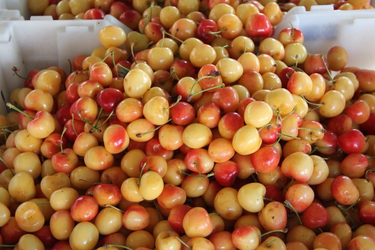 체리, 유기농, 산화 방지, 식사, 시장, 과일, 식품, 영양