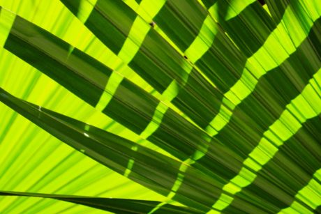 design, abstract, green leaf, shadow, sunlight