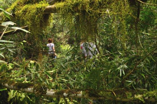 bois, environnement, nature, feuille, arbre, jungle, plante, paysage, forêt