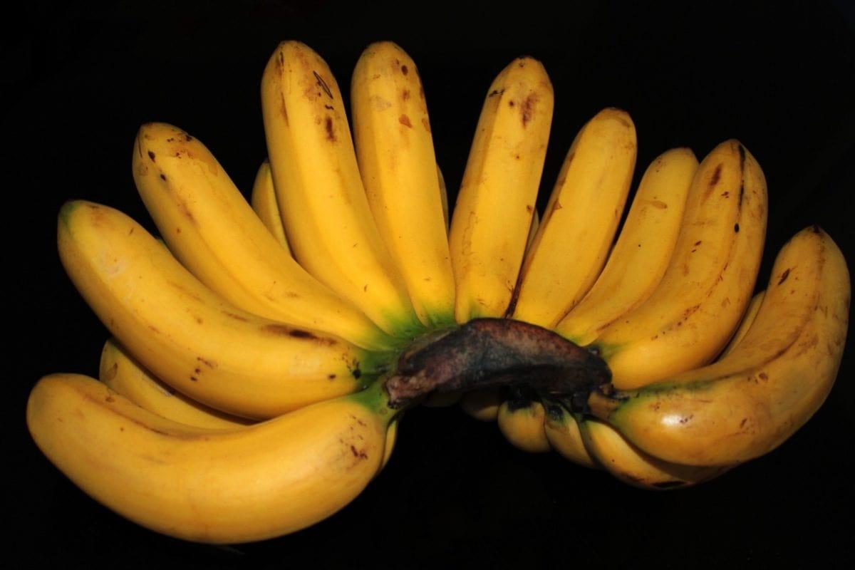 petit déjeuner, nourriture, banane jaune, fruit, nutrition, studio photo