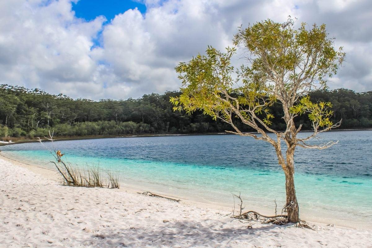 tree, summer, water, sand, person, nature, seashore, beach, sea, ocean