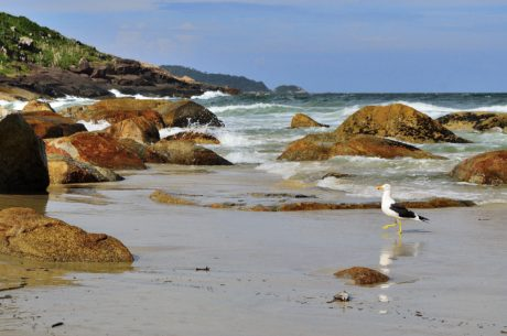 pescăruș, animal, pasăre, zi, ocean, mare, plajă, apă, litoral, litoral, litoral, peisaj