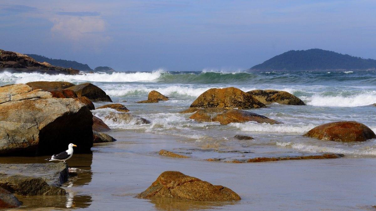 океан, Чайка, птици, животни, вода, плаж, море, крайбрежие, крайбрежие, пейзаж, Шор