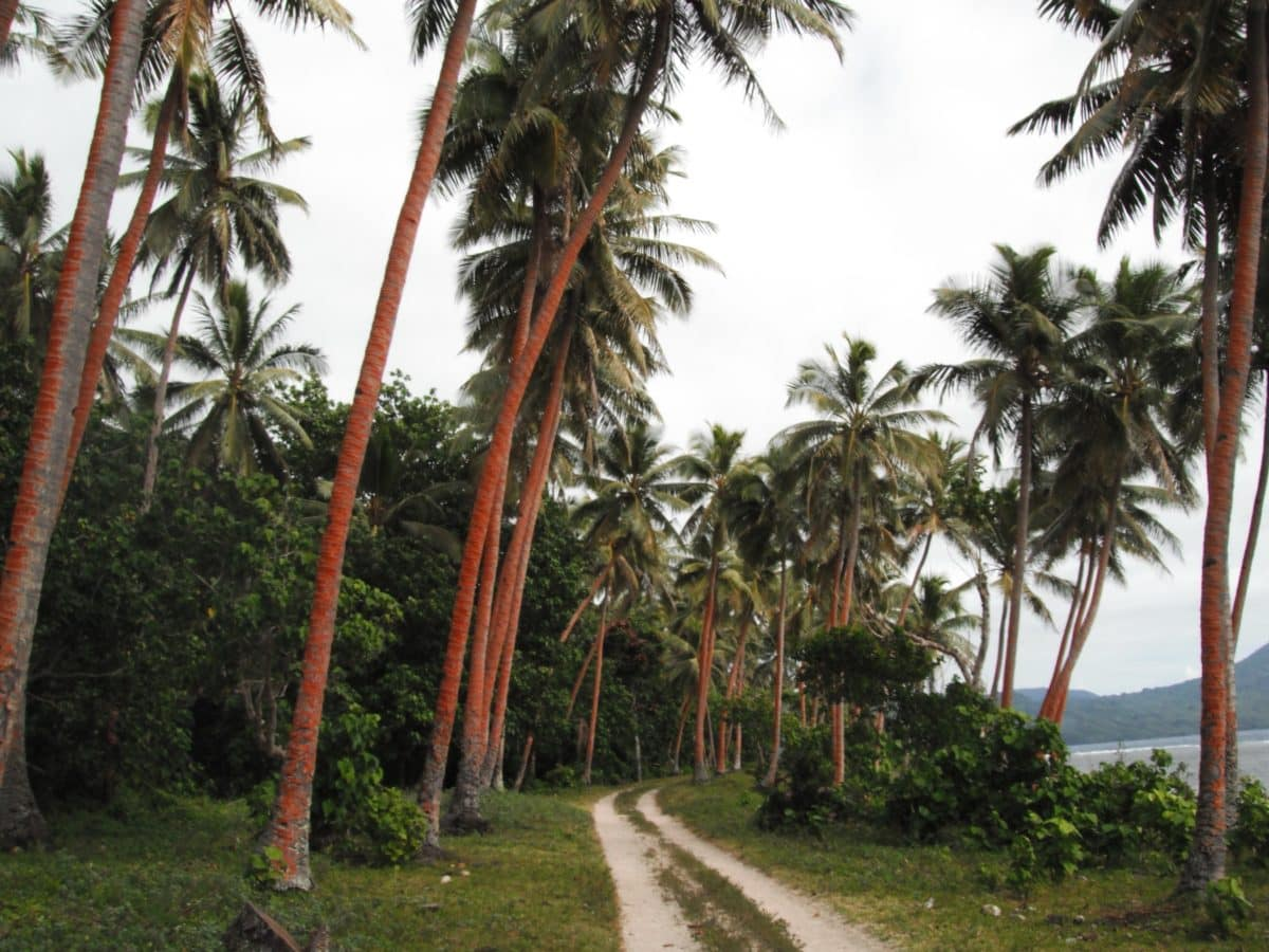 palm tree, beach, tree, summer, coconut, island, paradise, road