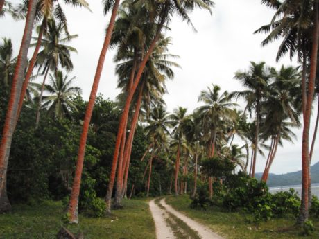 palm tree, beach, tree, summer, coconut, island, paradise, road