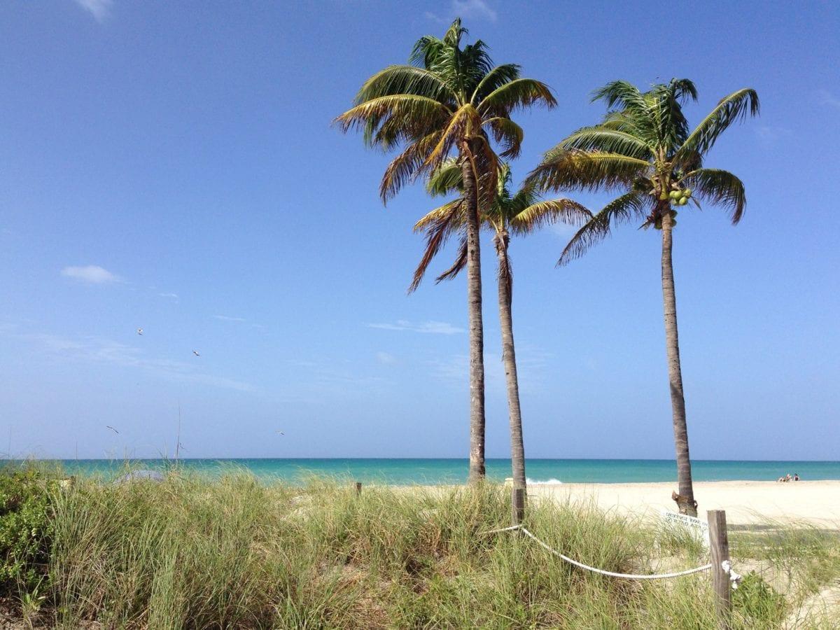 морски бряг, остров, лято, океан, плаж, пясък, кокос, длан, дневна светлина