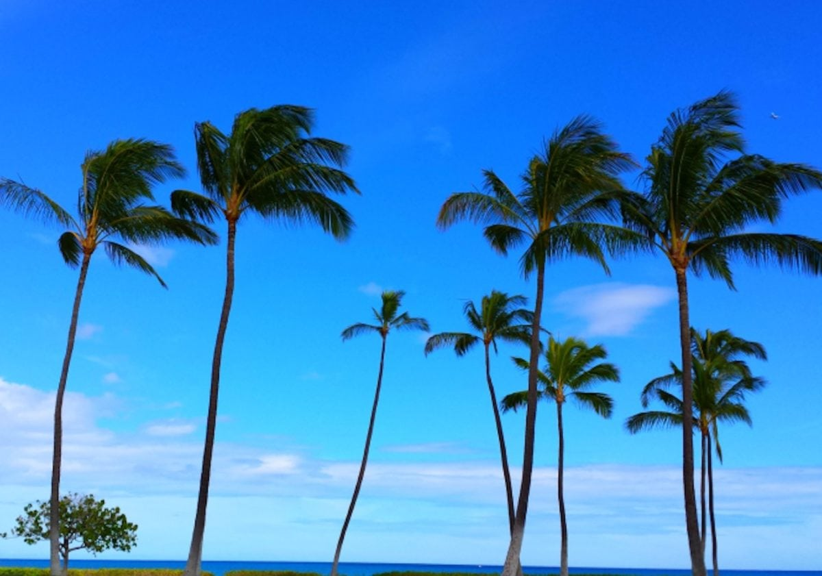 ocean, beach, palm tree, sun, sand, exotic, coconut, seashore
