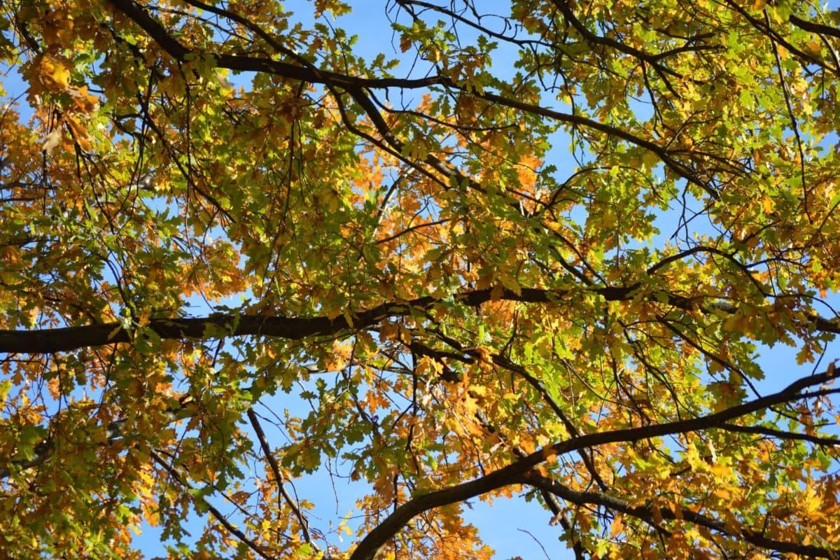 dřevo, příroda, větev, krajina, modrá obloha, list, strom, rostlina, Les
