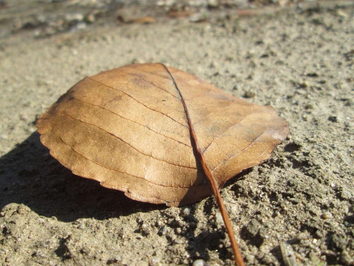 natur, tørt blad, brunt blad, efterårssæson, sand, jord, udendørs