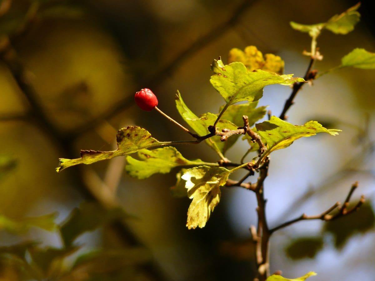 arbre de chêne, nature, lumière du jour, branche, feuille, herbe, forêt, végétation