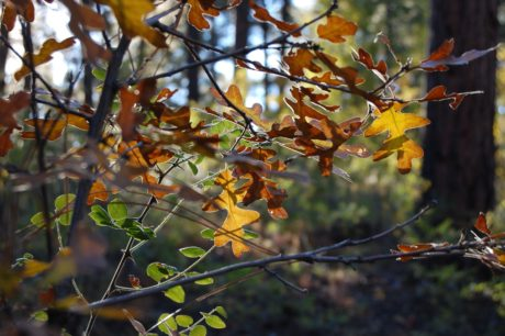 nature, oak leaf, flower, tree, branch, plant, autumn season, foliage, tree bark