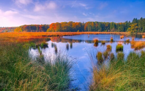water, nature, lake, sky, landscape, reflection, forest, wetland