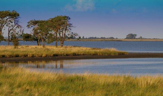 водно-болотних угідь, вода, краєвид, дерево, озеро, Синє небо, відбиття, небо, Lakeside