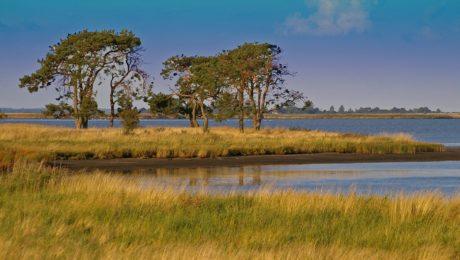 humedal, agua, lago, césped, reflexión, cielo azul, paisaje, árbol, naturaleza