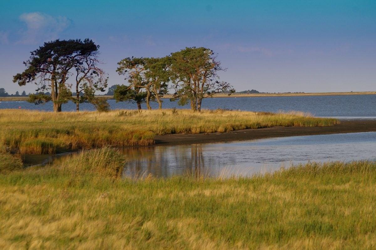 vand, natur, sø, træ, refleksion, vådområde, græs, Marsk, landskab