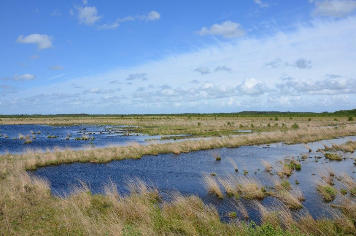 Lago, pântano, paisagem, água, céu azul, Wetland, Shoreline, grama elevada, ao ar livre