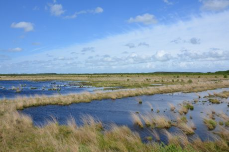 sø, sump, landskab, vand, blå himmel, vådområde, kystlinje, højt græs, udendørs