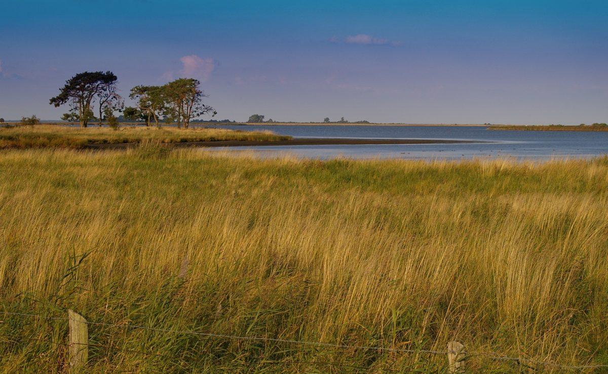 natur, vann, gress, blå himmel, landskap, felt, atmosfære, sommer