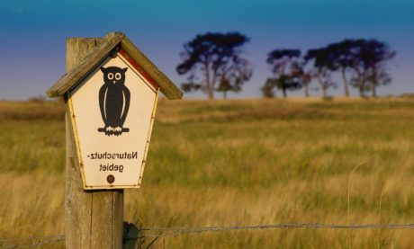 bird house, field, owl, grass, birdhouse, shelter, sign, outdoor, sky