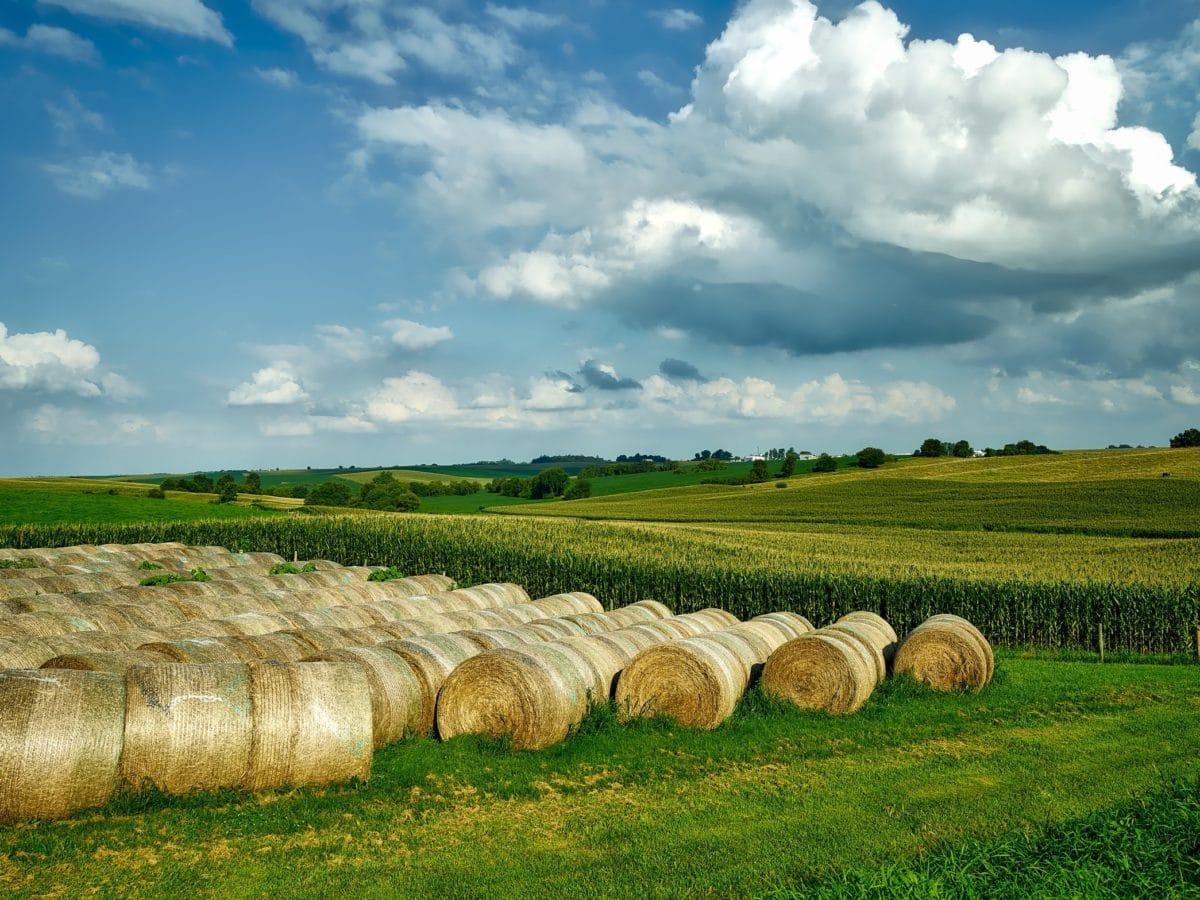 fű, szénakazalban, táj, Hé mező, vidék, mezőgazdaság, mező, szalma