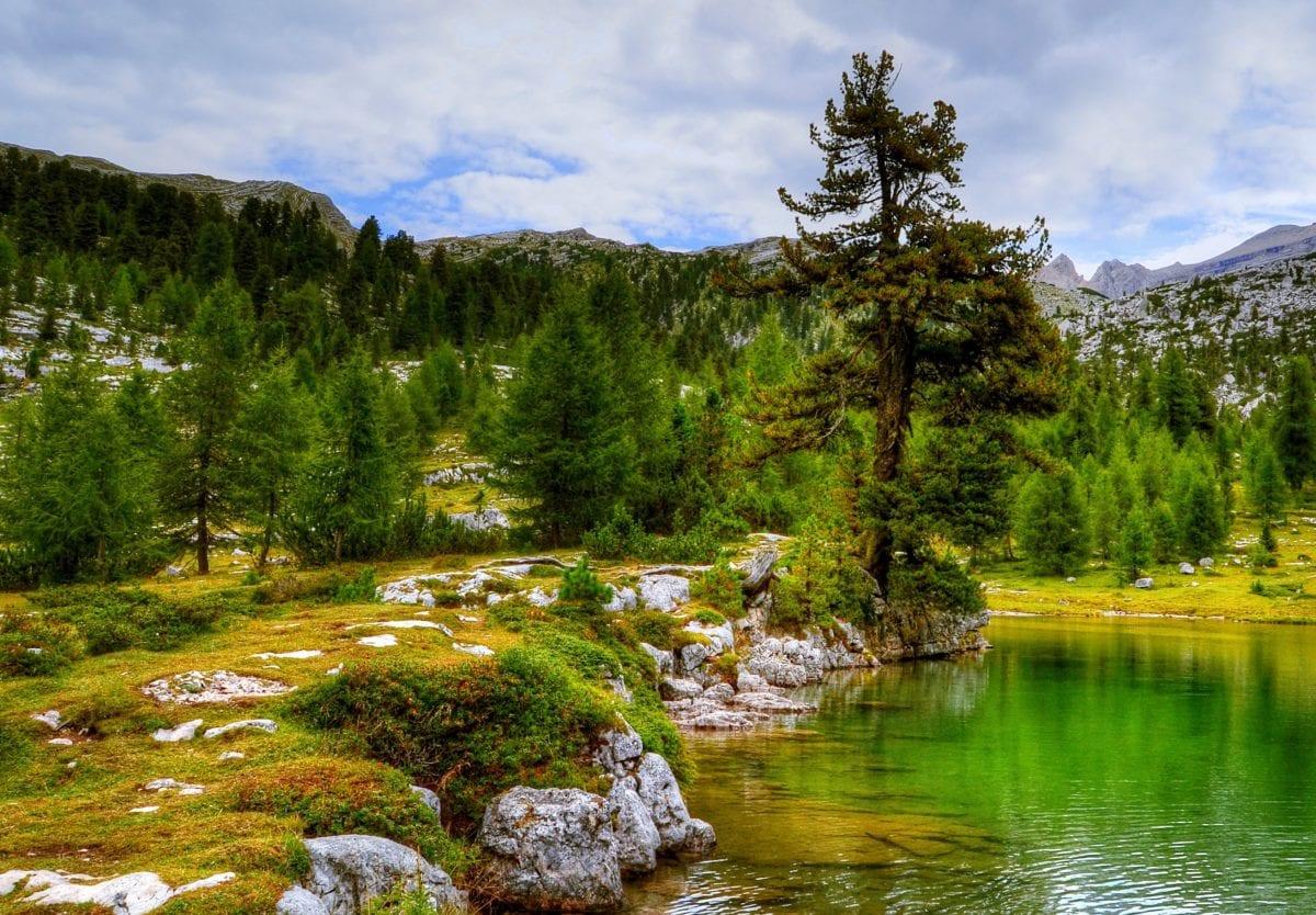 風景、山、湖、夏のシーズン、川、木、木、水、自然