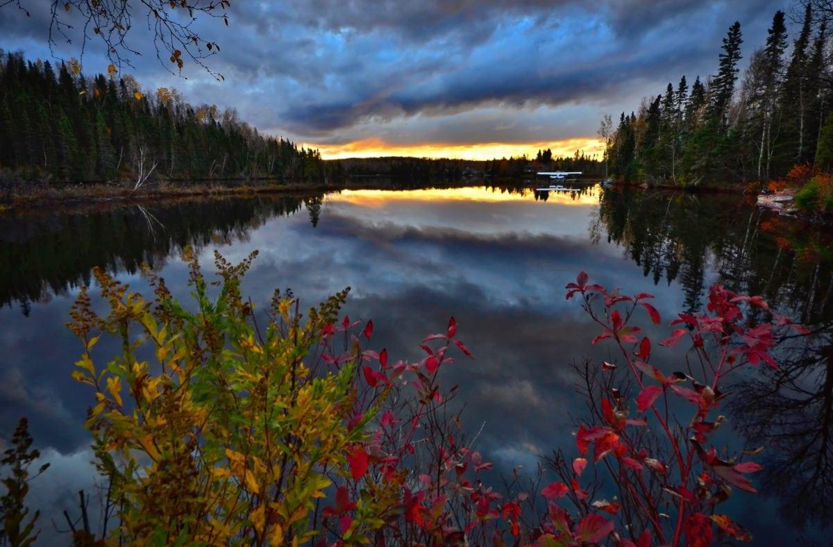 natt, mörker, liggande, sjö, reflektion, flod, natur, trä, vatten, träd