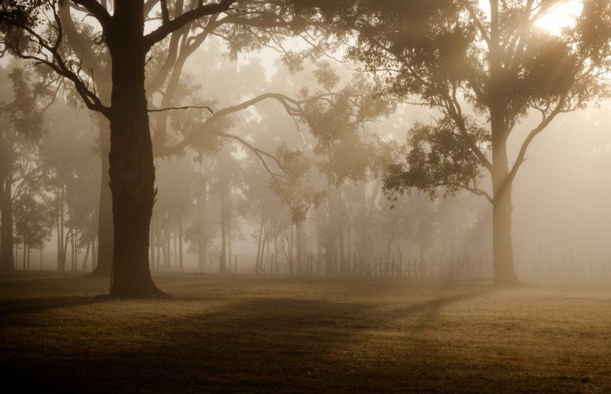 Hajnal, erdő, köd, fa, táj, köd, napfény, árnyék