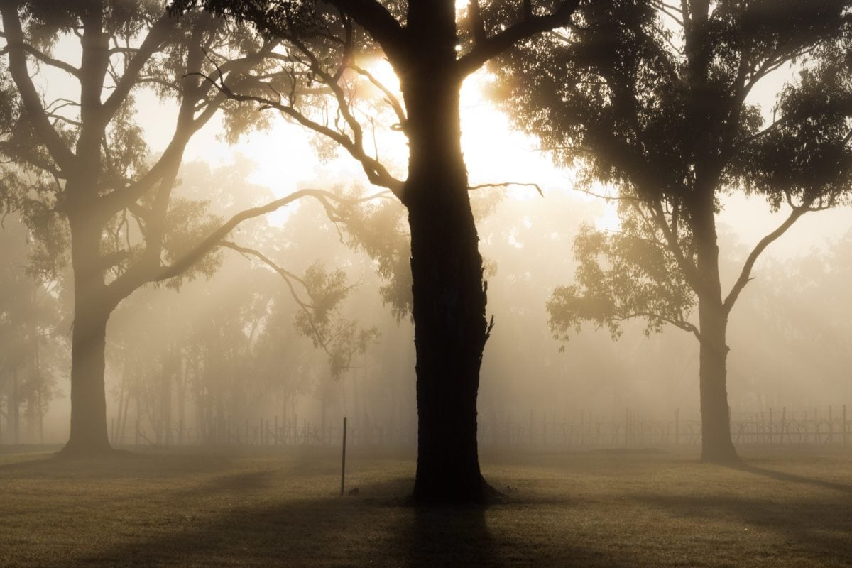 sollys, tre, tre, skygge, skog, solnedgang, soloppgang, tåke, tåke, landskap