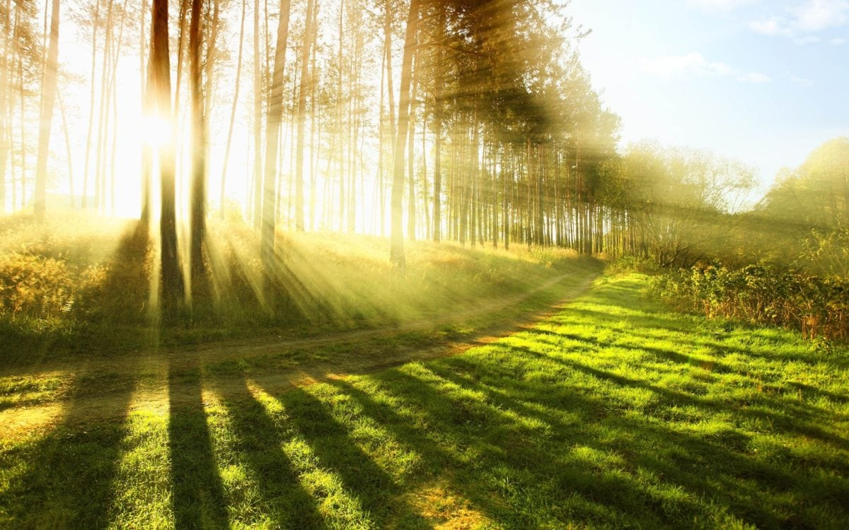 sunshine, nature, dawn, road, landscape, forest road, shadow, tree, green grass