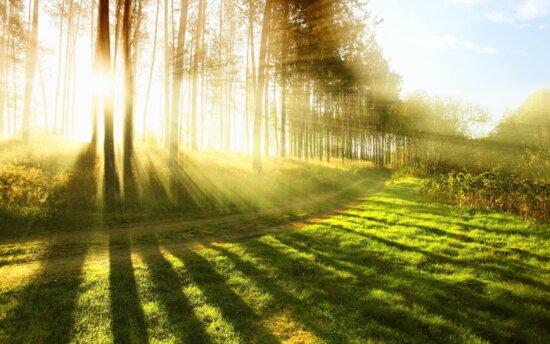 солнце, природа, Рассвет, дорога, пейзаж, Лесная дорога, тень, дерево, зеленая трава