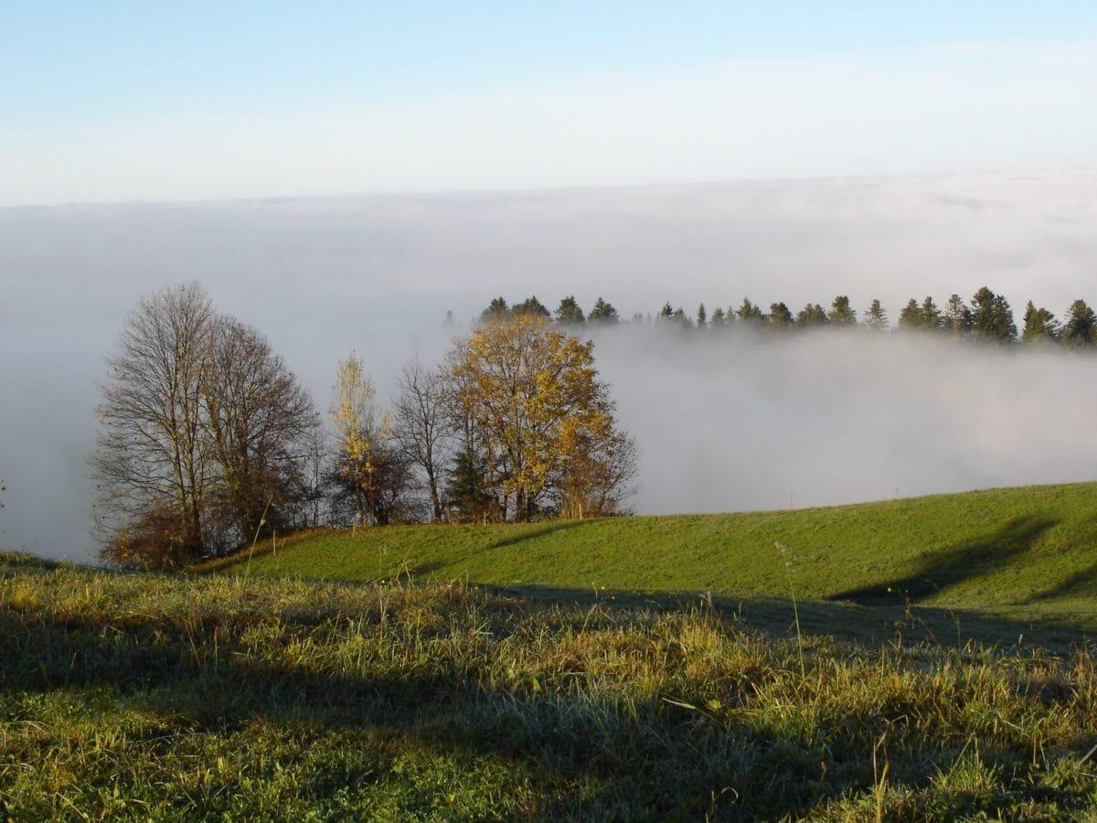 Природа, пейзаж, туман, дерево, зеленая трава, склон, небо, рапс, поле