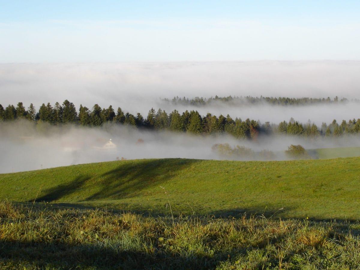 obloha, strom, hmla, príroda, tráva, krajina, jazero, voda, Les