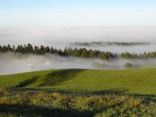 небо, дерево, туман, природа, трава, краєвид, озеро, вода, ліс
