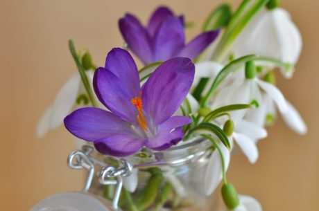flower, leaf, still life, crocus, plant, petal, blossom, bloom