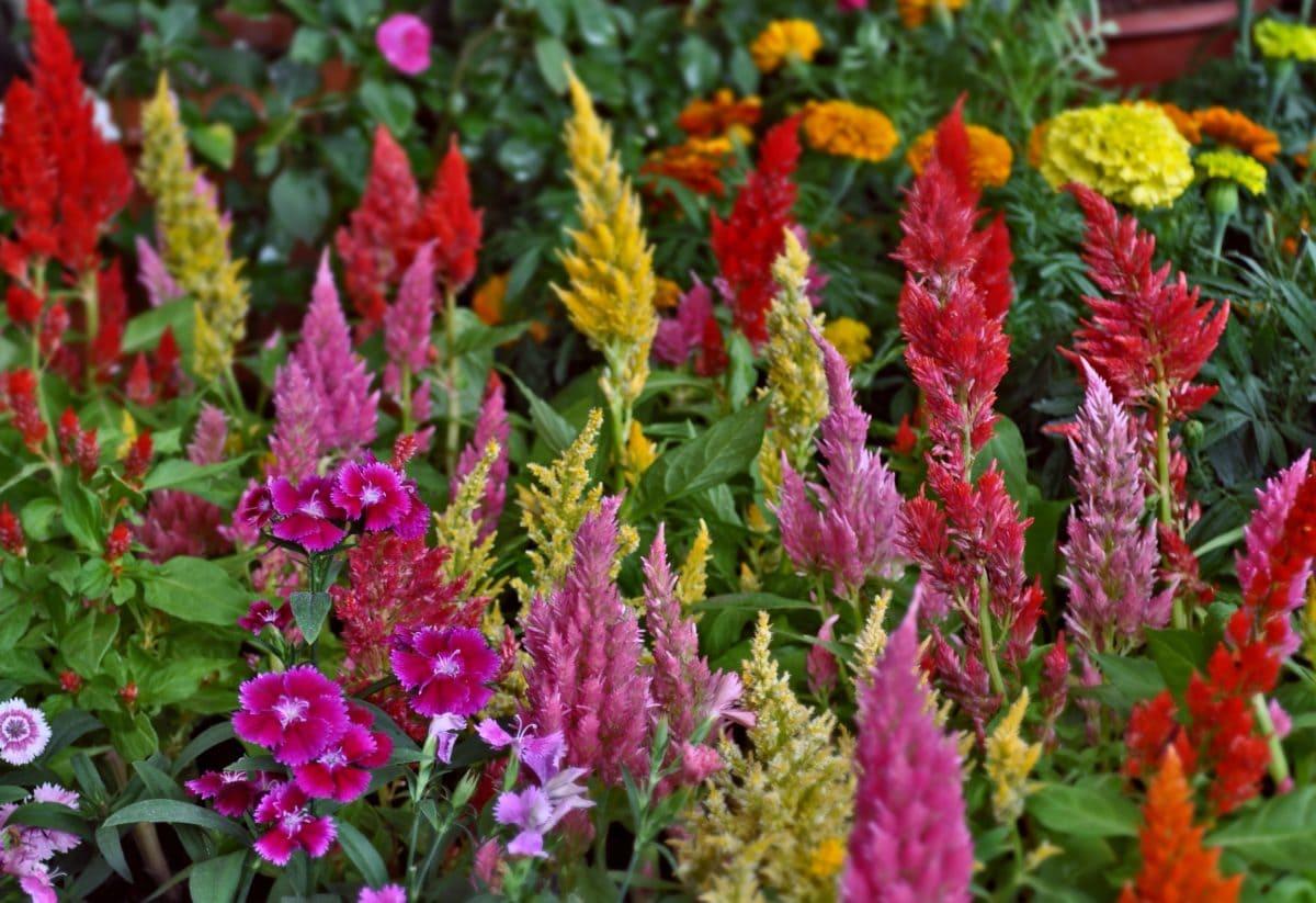 Bunte Blume, Blatt, Natur, Garten, Sommer, Kraut, Pflanze