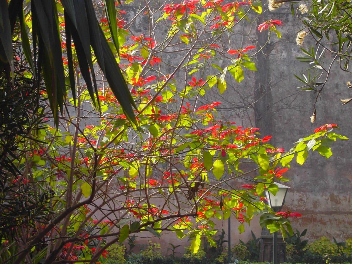 φύση, φύλλο, Κήπος, δέντρο, υποκατάστημα, φυτό