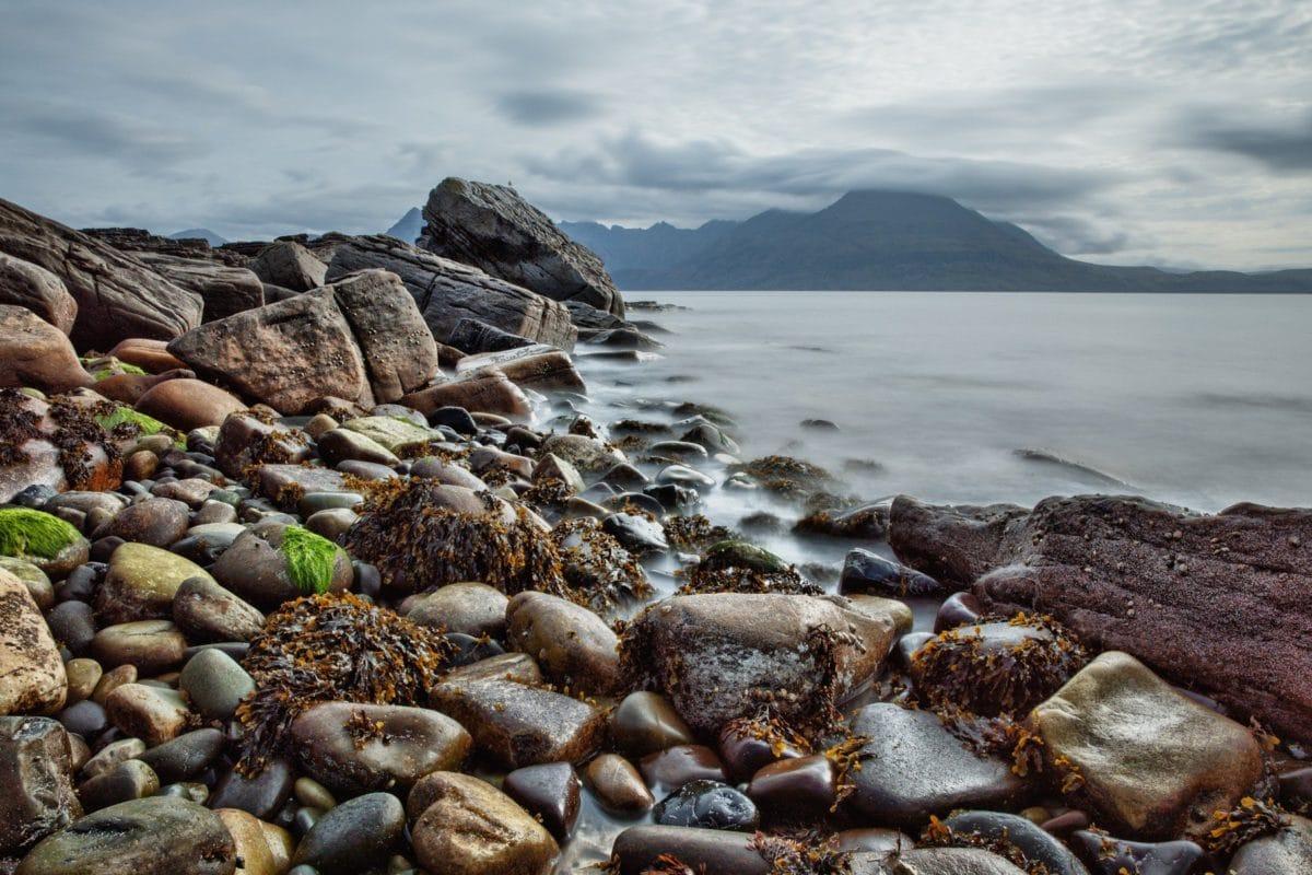 海、海、水、自然、エコロジー、雲、潮、ビーチ、海岸、海岸、無脊椎動物