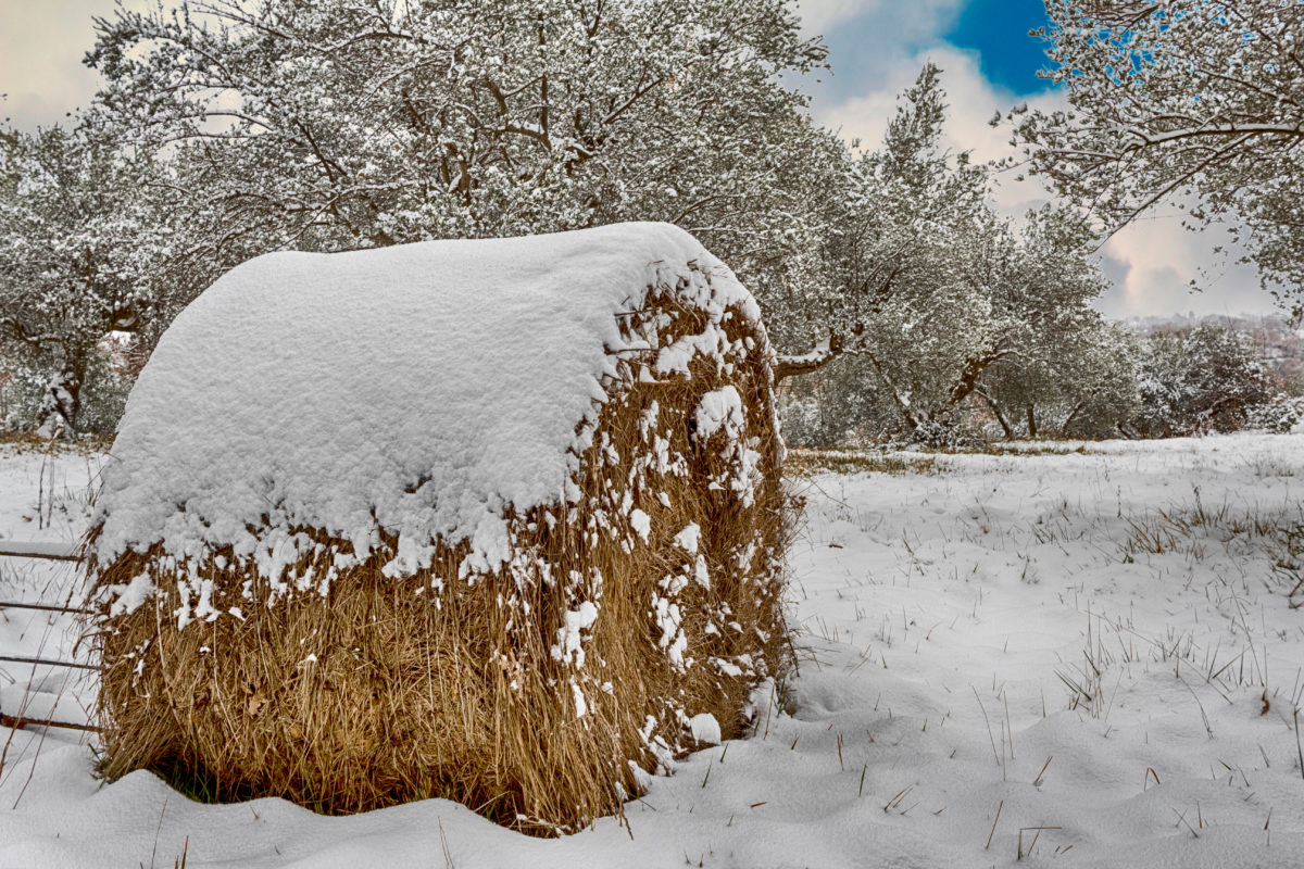 széna mező, szénakazalban, hó, téli, fa, táj, fagy, fagyasztott