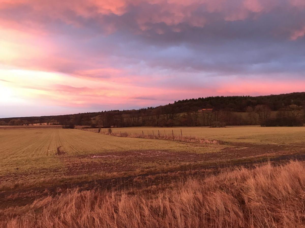 农业, 云计算, 字段, 日落, 气氛, 农场, 作物, 春季时间