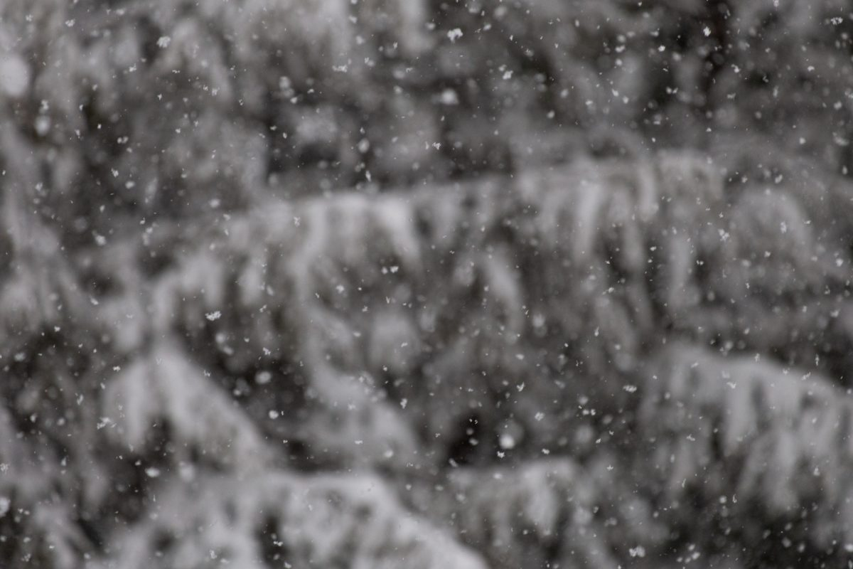 wind, winter, rain, snow, texture, dew, design, cold