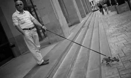 architectural, architecture, chien, escalier, gens, homme, rue, femme